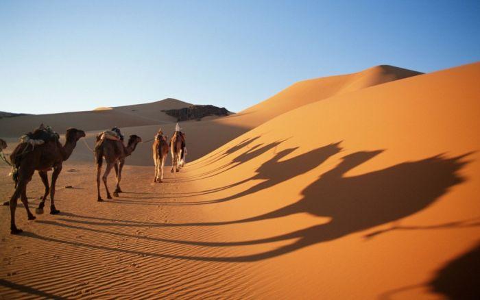 fakta-aneh-tentang-padang-pasir-yang-mesti-lo-tau-pulpn-com-1
